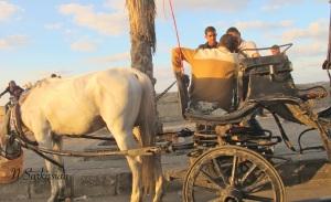 Cart on the Seafront Promenade, Alexandria, Egypt